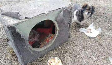 Полуслепая собака выживала в ящике у трассы. Ее просто выгнали из дома