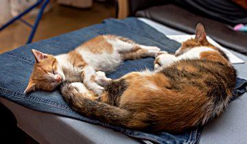 6 интересных причин, почему кошка любит лежать на одежде