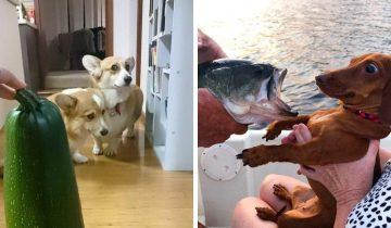 10 собак, которые боятся смешных вещей, и это очень веселит их хозяев