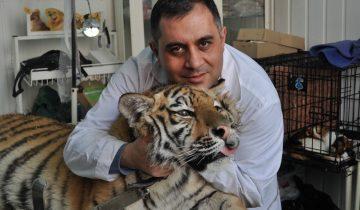 Ветеринар создал приют чтобы спасать жизни диких животных