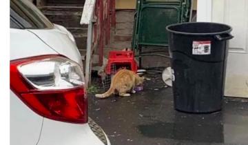 История пяти котят и их мамы, спасенных после сильного дождя