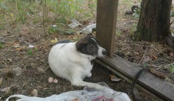 Пёсик звал на помощь и как мог лаял изо всех сил. Его оставили одного в лесу