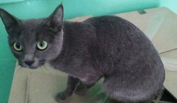 Крошечная кошка сидела в подъезде. Она не знала, что делать пока не появился Владимир