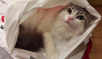 Десять прямых и очень важных обязанностей каждого домашнего кота