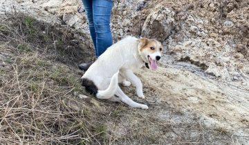 Жулик – собака-инвалид. Он жизнерадостный и ждёт любящих хозяев