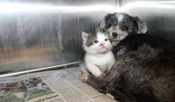 На дне оврага сидела собачка, но она находилась там добровольно — она охраняла крошку