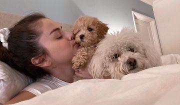Селена Гомес: «Зачем покупать, когда стольким бездомным животным нужен дом». Звезда «усыновила» 8 собак