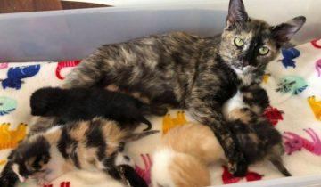Кошечка, которая спасла своих котят от холода, теперь радуется сбывшейся мечте