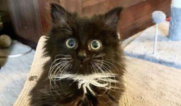 Пушистую кошечку, которая погибала на глазах, удалось спасти