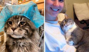 12 фото, которые демонстрируют истинную сущность кошек